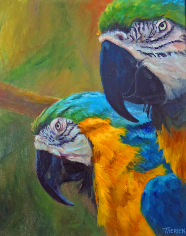 Parrot Couple - Palm Beach